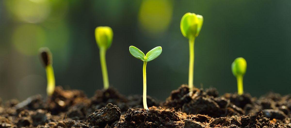 « Nature peut tout et fait tout. » MICHEL DE MONTAIGNE